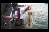 巨大アオリイカを狙え! 和歌山の沖磯でメタボジャーク炸裂!その2