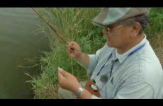 水郷のタナゴ釣り