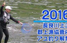 【岐阜県郡上市】2016 長良川上流郡上漁協管内のアユ釣り解禁(2016年6月5日)
