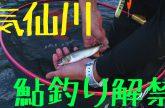 【いわて気仙川】せいやの気仙釣り三昧【2016鮎解禁編】