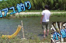 釣り。小鮎釣り。 コアユ大漁、入れ食いだ。 琵琶湖 淡水魚 Fishing